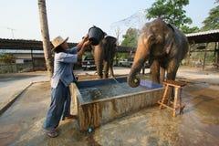 Het baden van de olifant stock afbeelding