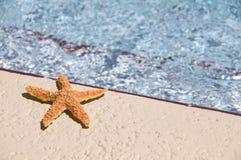 Het baden van de zon stervissen Royalty-vrije Stock Afbeelding