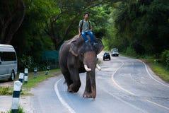Het baden van een olifant Royalty-vrije Stock Afbeelding