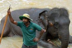 Het baden van een olifant bij Pinnawala-Olifantsweeshuis, Sri Lanka Royalty-vrije Stock Foto's