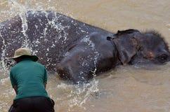 Het baden van een olifant bij Pinnawala-Olifantsweeshuis, Sri Lanka Stock Fotografie