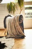 Het baden van uw hond Royalty-vrije Stock Foto