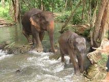 Het badtijd van olifanten Stock Foto