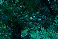 Het Balkon van het bomenbamboe plant Rand Forest Tropical Background royalty-vrije stock foto's