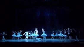 Het ballet van het Meer van de zwaan stock videobeelden