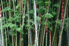 Het bamboe is achtergrond Royalty-vrije Stock Afbeeldingen