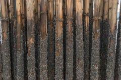 Het bamboe beschermt zand tegen overzeese golf Royalty-vrije Stock Foto's