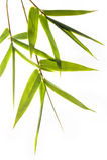 Het bamboe doorbladert