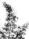 Het bamboe gaat en vertakt zich in Silhouet weg stock illustratie