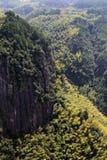 Het bamboe op de helling Royalty-vrije Stock Afbeelding