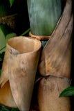 Het Bamboe van bloemblaadjes Royalty-vrije Stock Foto