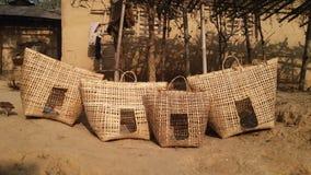 Het Bamboe van de kippenkippenren Stock Fotografie