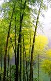 Het bamboe van de lente stock foto