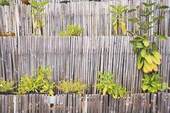 Het bamboe van de muur Stock Fotografie