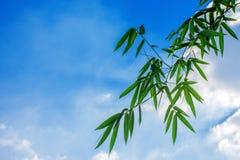 Het bamboe verlaat de hemel royalty-vrije stock foto