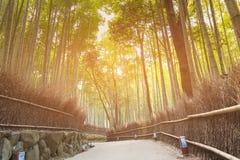 Het Bamboebos van Kyoto met het lopen manier Royalty-vrije Stock Foto's