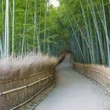 Het bamboebosje van Kyoto Stock Afbeelding