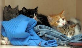 Het bang gemaakte katjes verbergen royalty-vrije stock foto's
