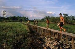 Het Bassin van Amazonië Stock Fotografie