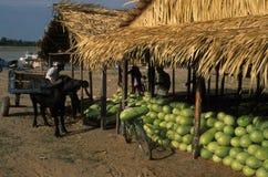 Het Bassin van Amazonië Royalty-vrije Stock Afbeeldingen