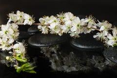 Het Beautiful Spa plaatsen van zenstenen, bloeiend takje van pruim Royalty-vrije Stock Afbeeldingen
