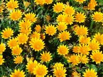 Het bed van de bloem Stock Foto