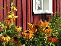 Het bed van de bloem door het venster Stock Fotografie