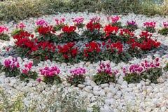Het bed van de bloem met bloemen stock foto