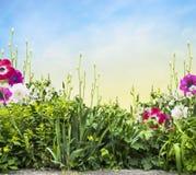 Het bed van de de zomerbloem met iris en anemonen op zonnige skay Stock Foto