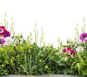 Het bed van de de zomerbloem met iris en anemonen, siolated Royalty-vrije Stock Foto