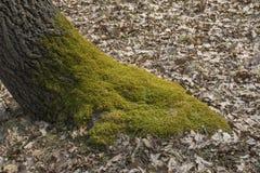 Het bed van het boommos royalty-vrije stock afbeeldingen