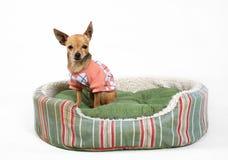 Het bed van het huisdier Stock Afbeelding