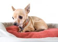 Het bed van het huisdier Stock Foto's
