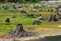 Het bed van het meer met dode bomen Royalty-vrije Stock Foto's