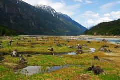 Het bed van het meer met dode bomen Royalty-vrije Stock Afbeeldingen