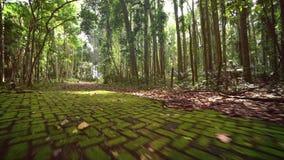 Het bedekken plakken met mos worden overwoekerd dat Gang door regenwoudweg stock video