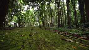 Het bedekken plakken met mos worden overwoekerd dat Gang door regenwoudweg stock footage