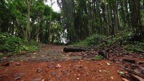 Het bedekken plakken met mos worden overwoekerd dat Gang door regenwoudweg stock videobeelden