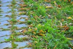 Het bedekken van het spoor Gevallen bladeren in het groene gras en op de stoep Royalty-vrije Stock Foto's