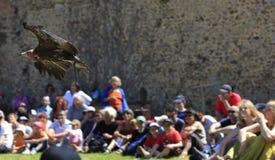 Het bedwingen van vogels toont royalty-vrije stock foto