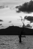 Het beeld, de boom en de berg van Boedha van de Sillohuetteschaduw Royalty-vrije Stock Afbeelding