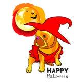 In het beeld de hond Franse buldog in een pompoen, een pompoen met een glimlach, een pompoen met kwaad gezicht, suikergoed, beend stock illustratie