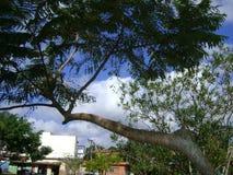 Het beeld schilderde van nature zelf, boom die over vijver leunen stock afbeeldingen