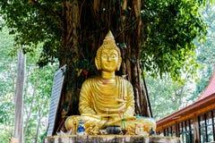 Het beeld van Boedha onder Bodhi-boom Royalty-vrije Stock Fotografie