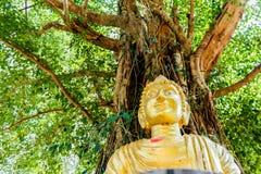Het beeld van Boedha onder Bodhi-boom stock afbeelding