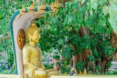 Het beeld van Boedha onder Bodhi-boom royalty-vrije stock foto