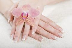 Het beeld van de close-up van mooie spijkers en vrouwenvingers Stock Foto