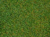 Het beeld van de Groene achtergrond van het grasgebied, textuur, patroon Stock Afbeeldingen