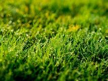 Het beeld van de Groene achtergrond van het grasgebied, textuur, patroon Royalty-vrije Stock Afbeeldingen
