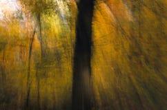 Het Beeld van de herfst met de Boomstam van de Boom Royalty-vrije Stock Afbeeldingen